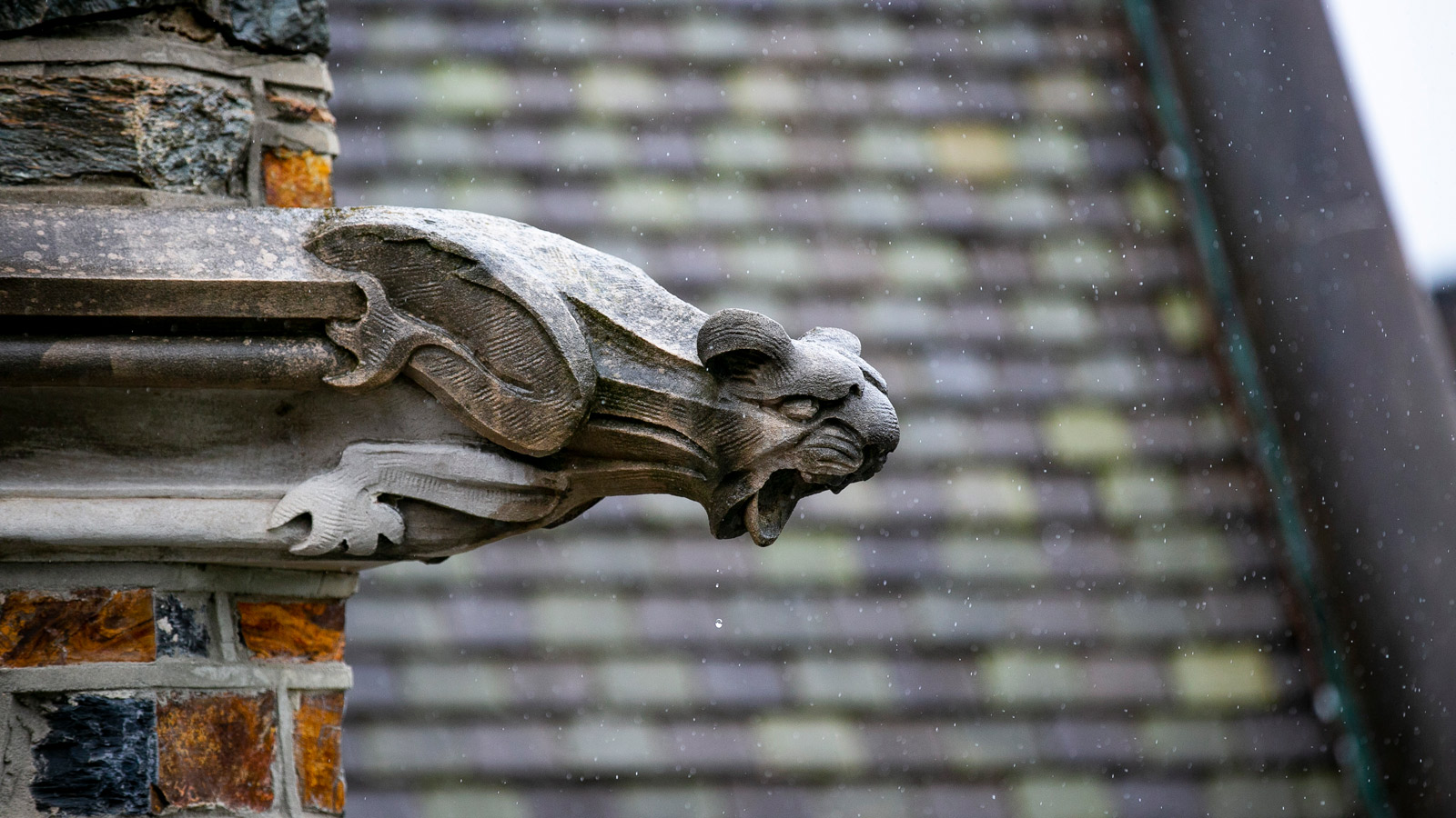 Image of gargoyle from Duke building